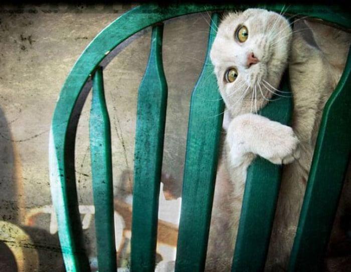 25 gatos que imediatamente se arrependeram de suas más escolhas 15