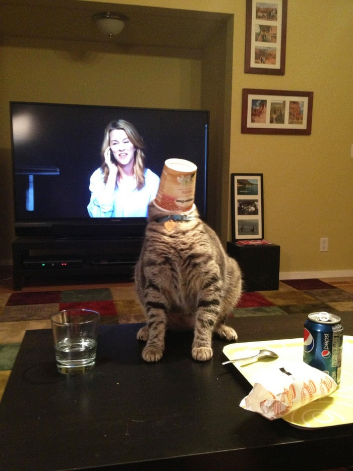 25 gatos que imediatamente se arrependeram de suas más escolhas 17