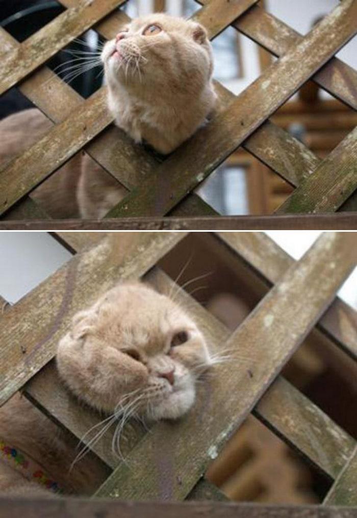 25 gatos que imediatamente se arrependeram de suas más escolhas 18