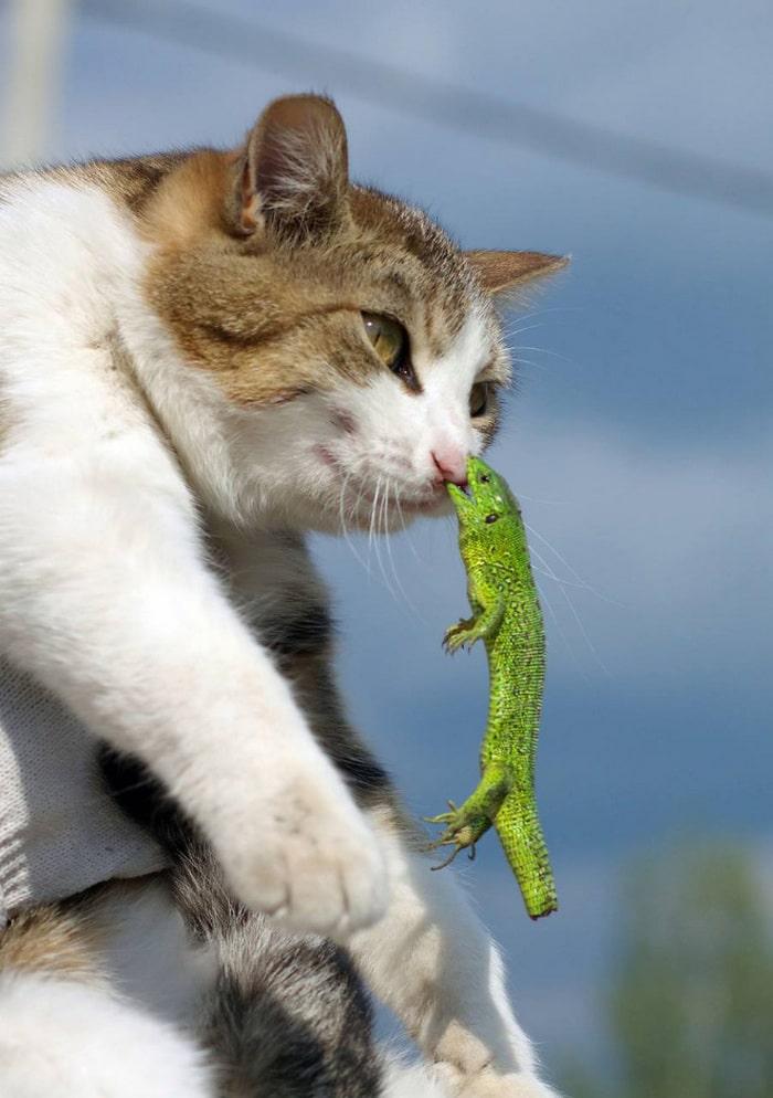 25 gatos que imediatamente se arrependeram de suas más escolhas 19