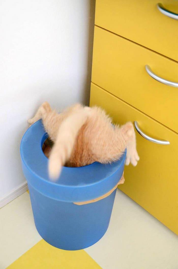25 gatos que imediatamente se arrependeram de suas más escolhas 20