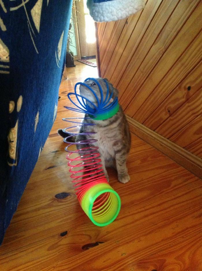 25 gatos que imediatamente se arrependeram de suas más escolhas 22