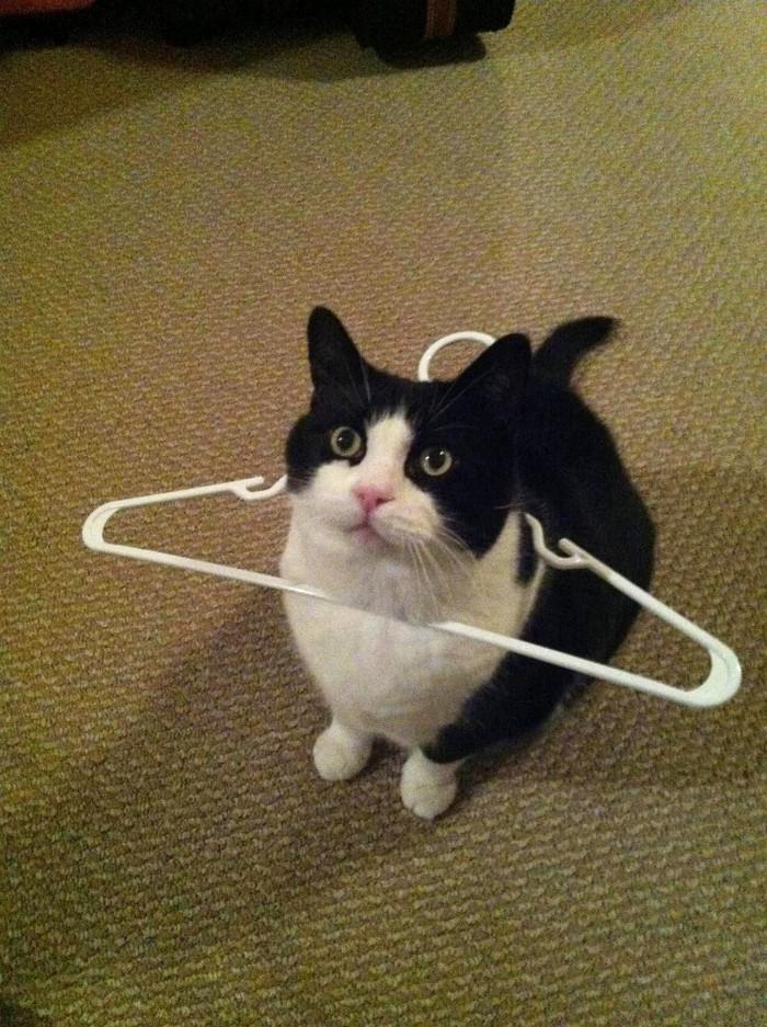 25 gatos que imediatamente se arrependeram de suas más escolhas 25