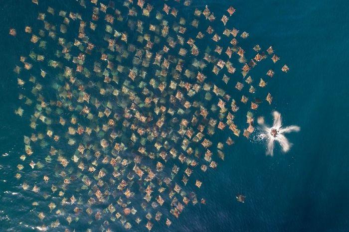 30 melhores fotos tiradas por drones em 2020 19