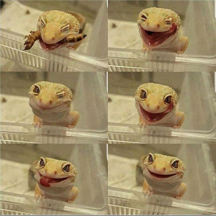 Por que nunca devemos perseguir lagartixas 6