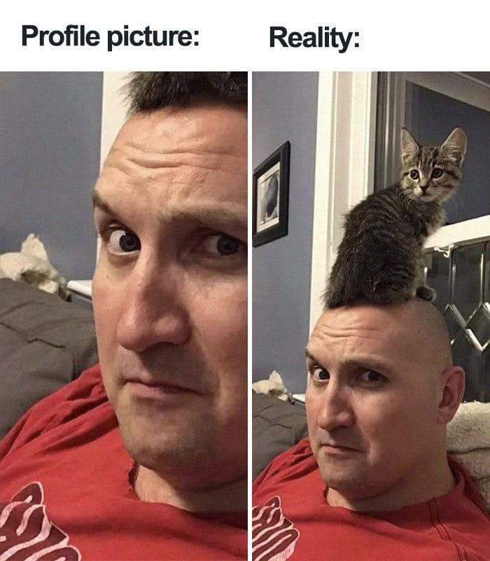 35 fotos de gatos hilariantes que você precisa ver 2