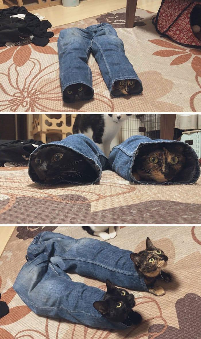 35 fotos de gatos hilariantes que você precisa ver 6