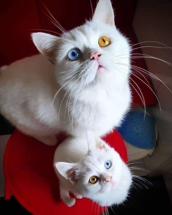 35 fotos de gatos hilariantes que você precisa ver 8