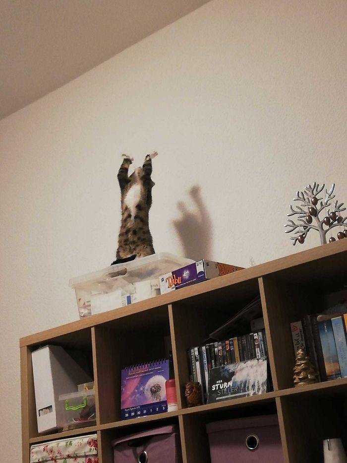 35 fotos de gatos hilariantes que você precisa ver 9
