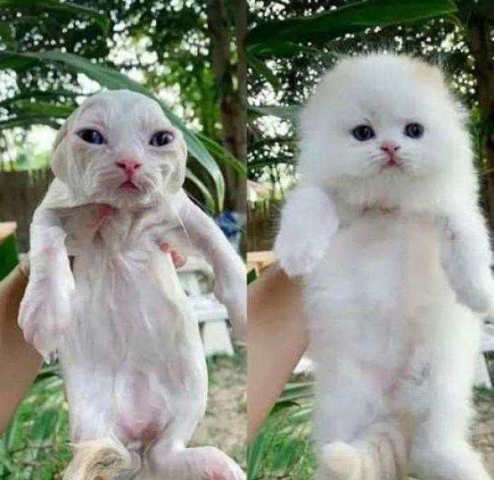 35 fotos de gatos hilariantes que você precisa ver 10
