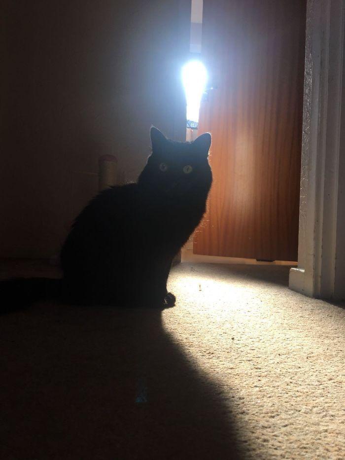 35 fotos de gatos hilariantes que você precisa ver 12
