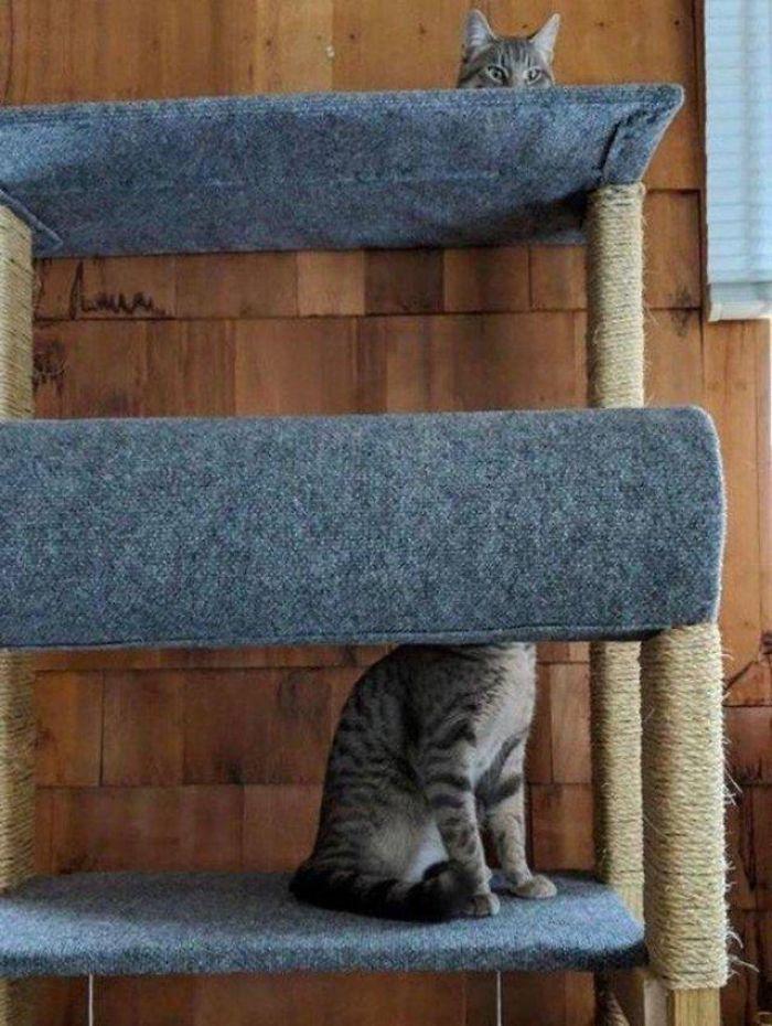 35 fotos de gatos hilariantes que você precisa ver 27
