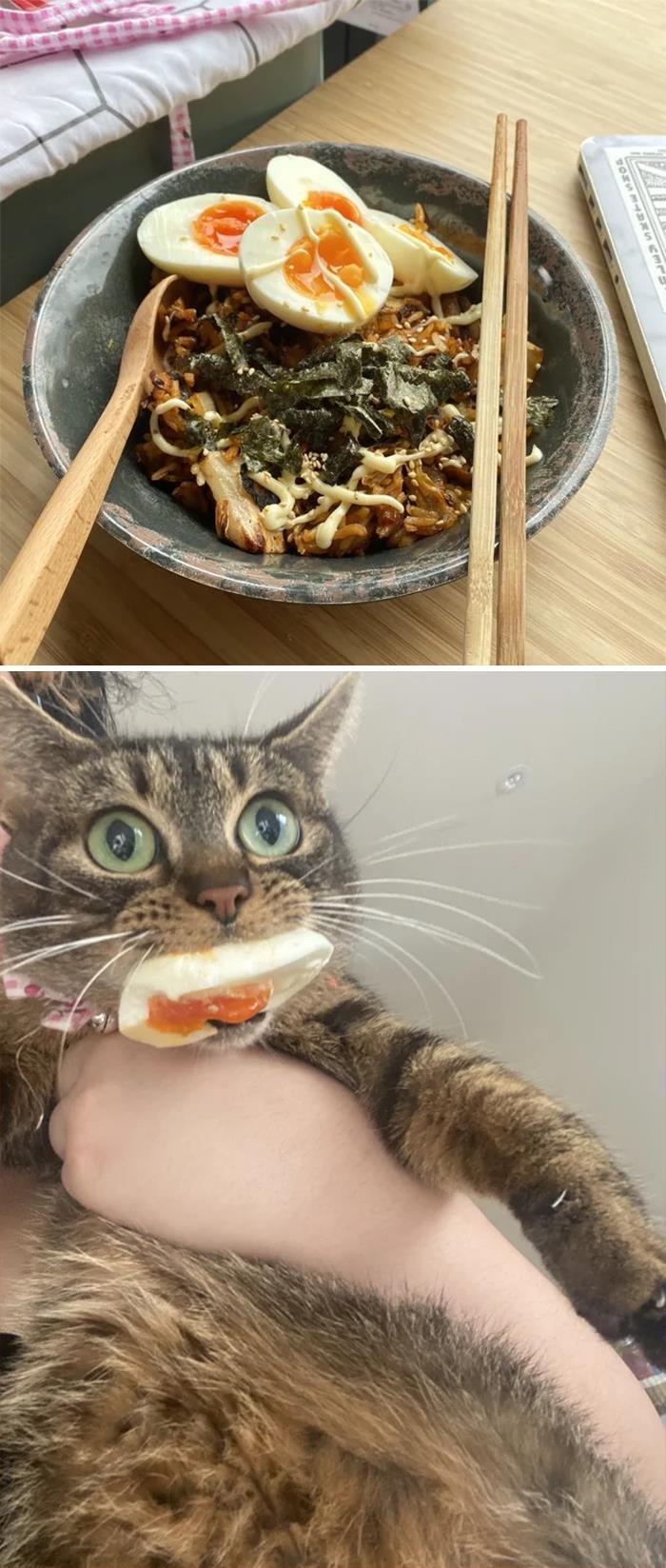 35 fotos de gatos hilariantes que você precisa ver 28