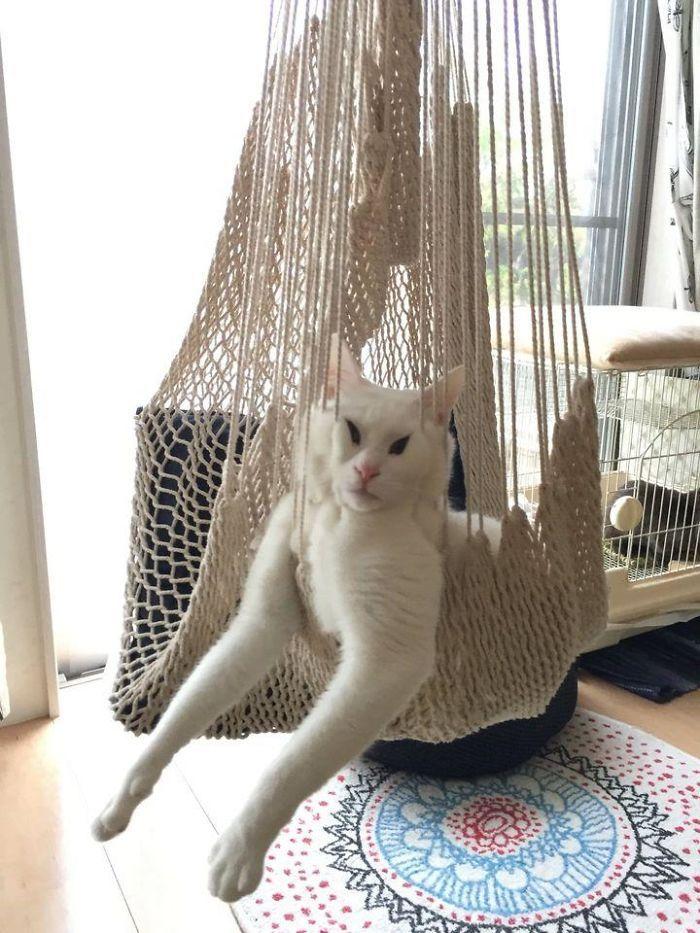 35 fotos de gatos hilariantes que você precisa ver 30