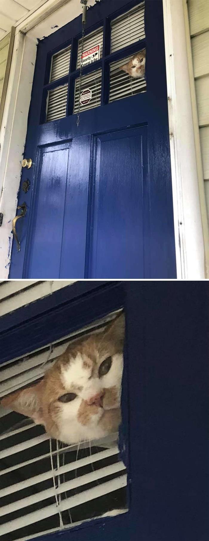 35 fotos de gatos hilariantes que você precisa ver 34