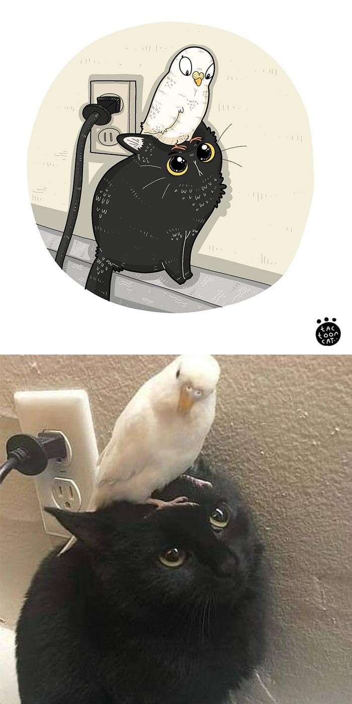 38 fotos de gatos mais engraçadas e famosas da Internet são ilustradas pela Tactooncat 10