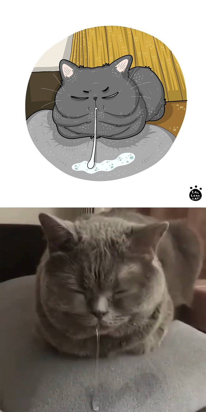 38 fotos de gatos mais engraçadas e famosas da Internet são ilustradas pela Tactooncat 19