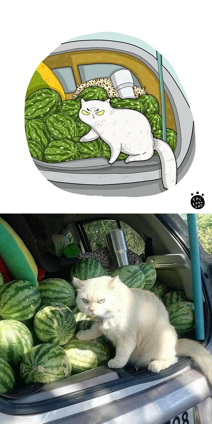 38 fotos de gatos mais engraçadas e famosas da Internet são ilustradas pela Tactooncat 29