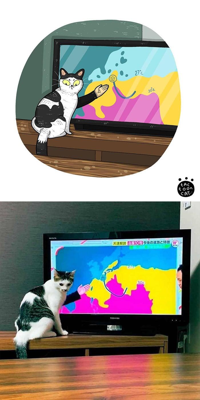 38 fotos de gatos mais engraçadas e famosas da Internet são ilustradas pela Tactooncat 33