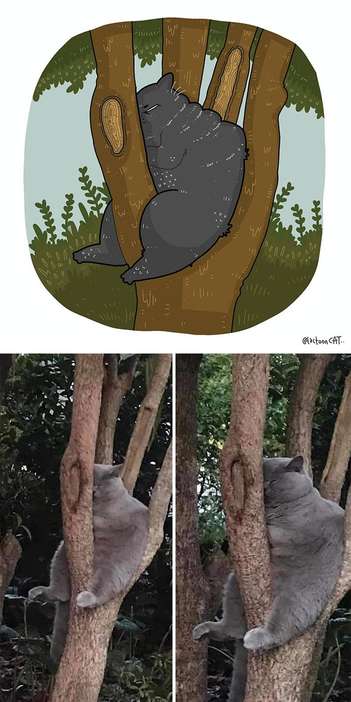 38 fotos de gatos mais engraçadas e famosas da Internet são ilustradas pela Tactooncat 36