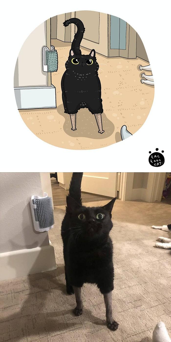 38 fotos de gatos mais engraçadas e famosas da Internet são ilustradas pela Tactooncat 38