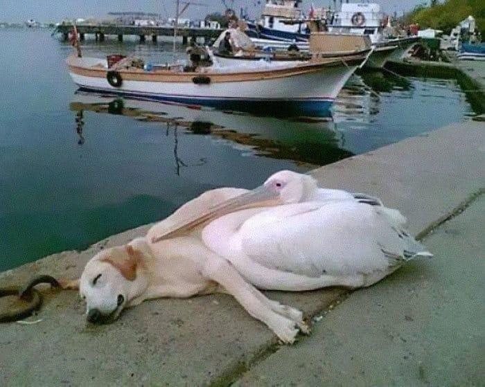 Se você acha que o mundo é terrível, essas 40 amizades com animais podem mudar sua opinião 2