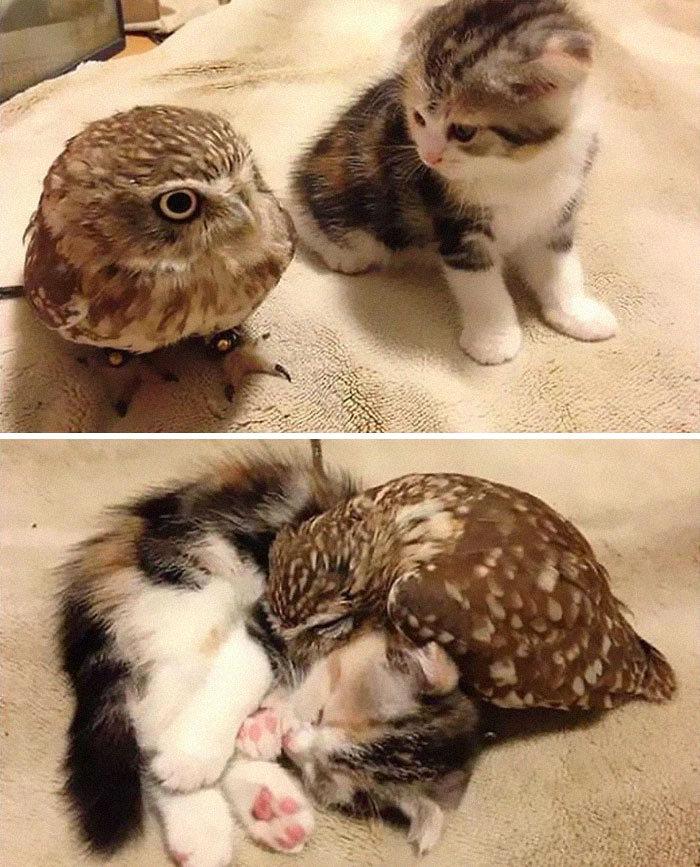 Se você acha que o mundo é terrível, essas 40 amizades com animais podem mudar sua opinião 3