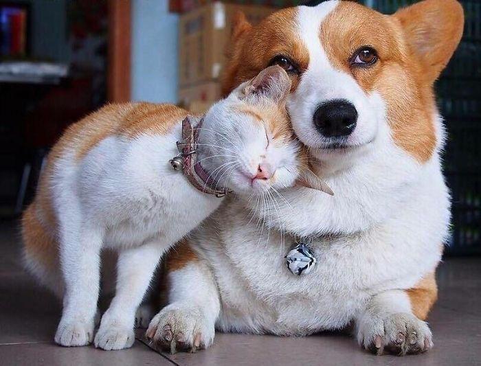 Se você acha que o mundo é terrível, essas 40 amizades com animais podem mudar sua opinião 4