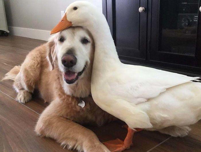 Se você acha que o mundo é terrível, essas 40 amizades com animais podem mudar sua opinião 5