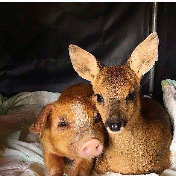 Se você acha que o mundo é terrível, essas 40 amizades com animais podem mudar sua opinião 7