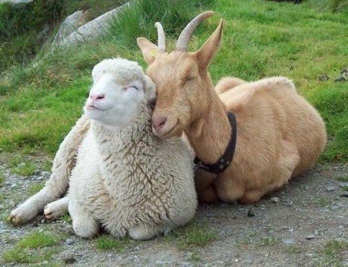 Se você acha que o mundo é terrível, essas 40 amizades com animais podem mudar sua opinião 10