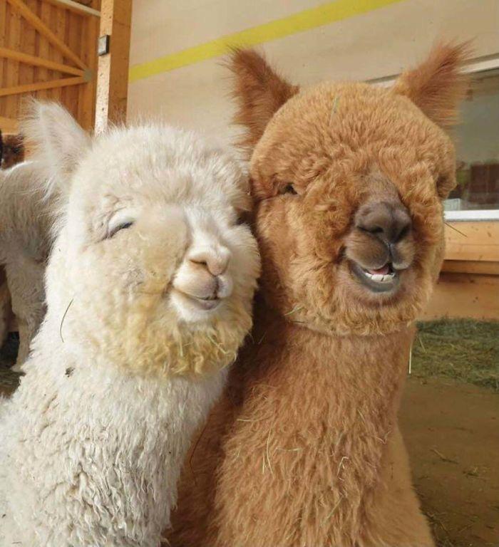 Se você acha que o mundo é terrível, essas 40 amizades com animais podem mudar sua opinião 12