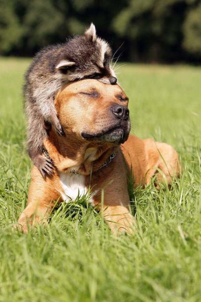 Se você acha que o mundo é terrível, essas 40 amizades com animais podem mudar sua opinião 13