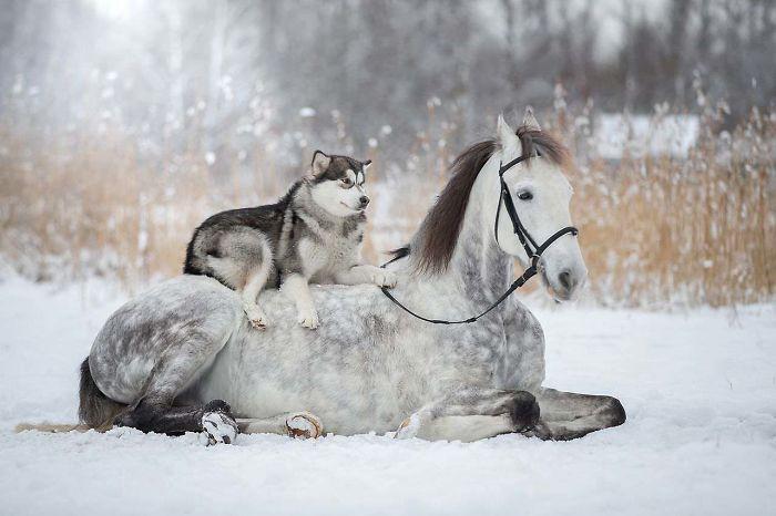 Se você acha que o mundo é terrível, essas 40 amizades com animais podem mudar sua opinião 14