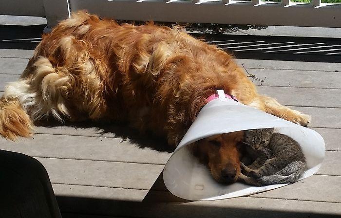 Se você acha que o mundo é terrível, essas 40 amizades com animais podem mudar sua opinião 17