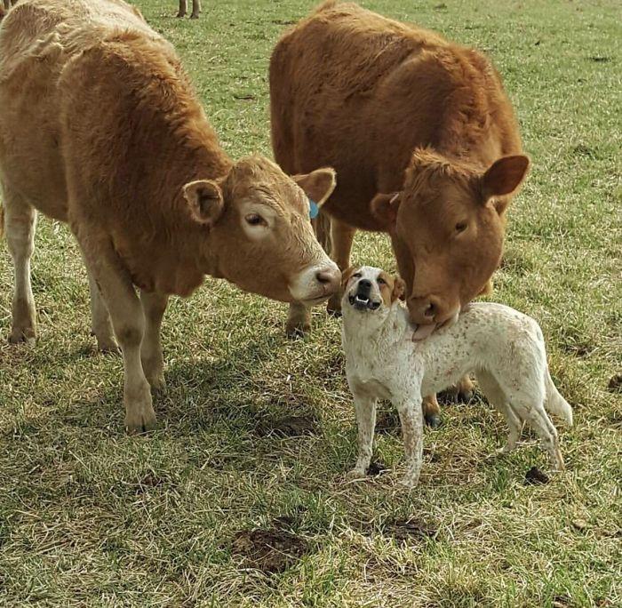 Se você acha que o mundo é terrível, essas 40 amizades com animais podem mudar sua opinião 20