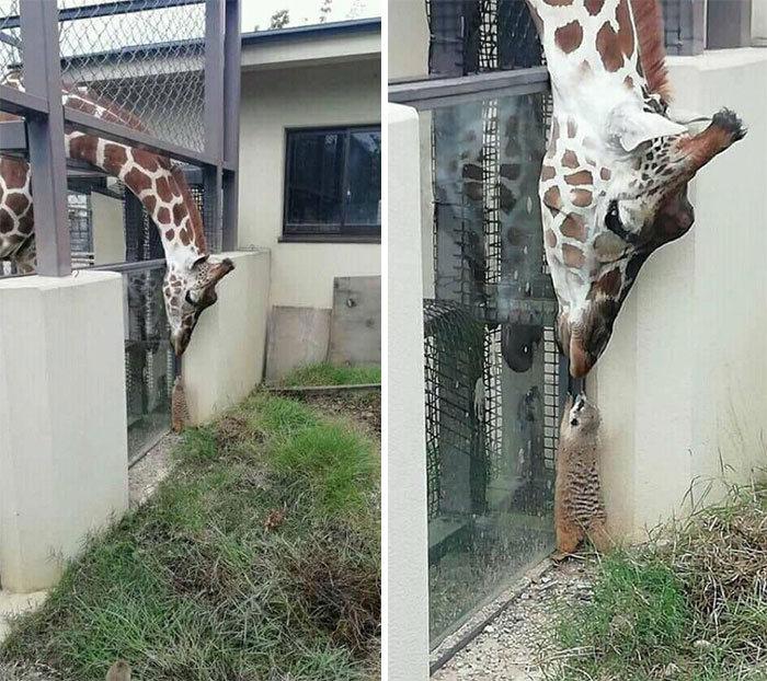 Se você acha que o mundo é terrível, essas 40 amizades com animais podem mudar sua opinião 25