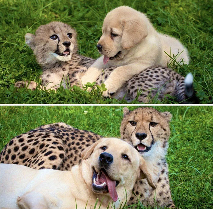 Se você acha que o mundo é terrível, essas 40 amizades com animais podem mudar sua opinião 26