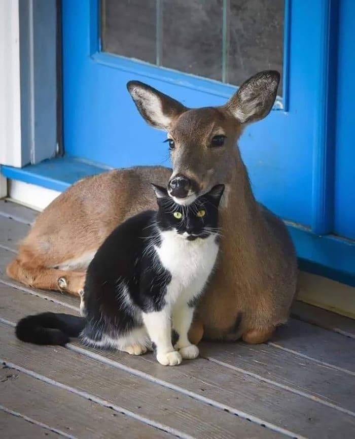 Se você acha que o mundo é terrível, essas 40 amizades com animais podem mudar sua opinião 27