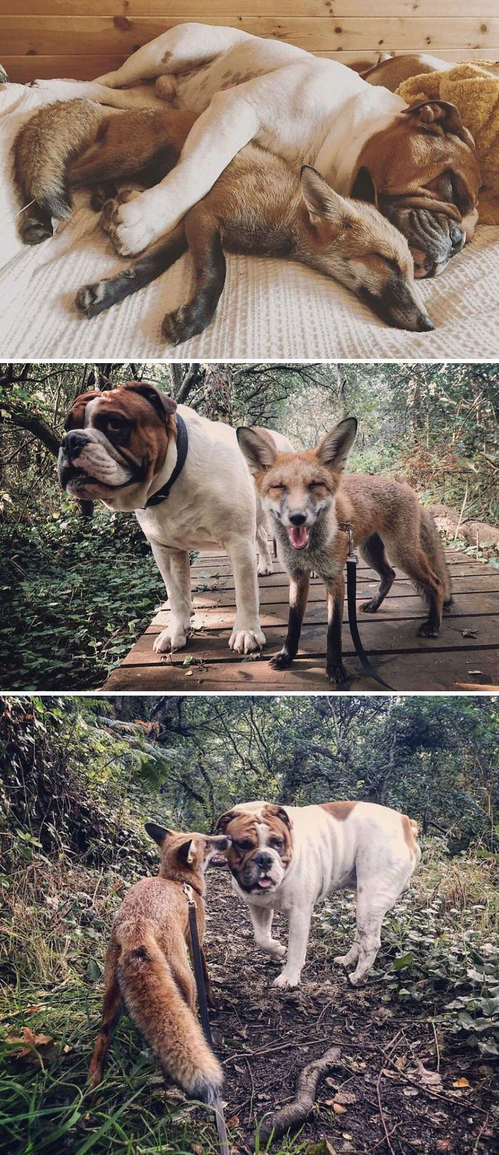 Se você acha que o mundo é terrível, essas 40 amizades com animais podem mudar sua opinião 29