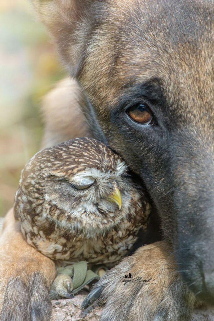 Se você acha que o mundo é terrível, essas 40 amizades com animais podem mudar sua opinião 30