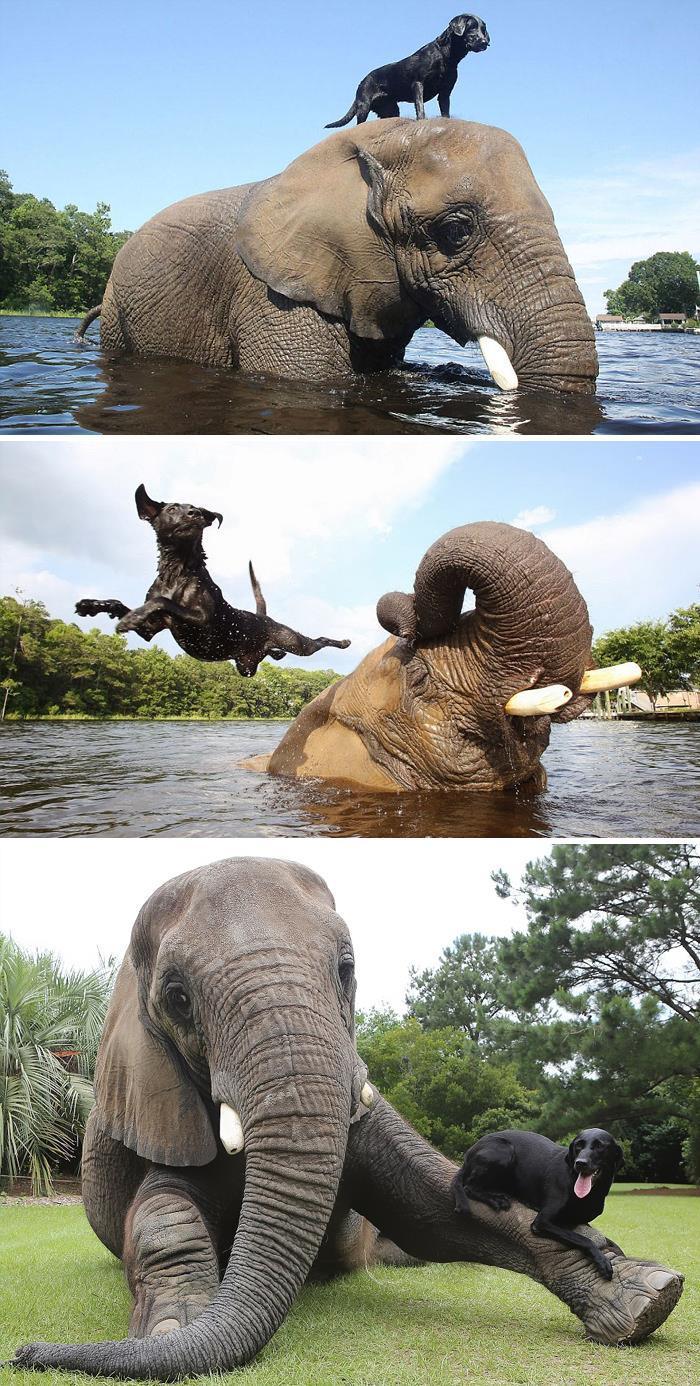 Se você acha que o mundo é terrível, essas 40 amizades com animais podem mudar sua opinião 31