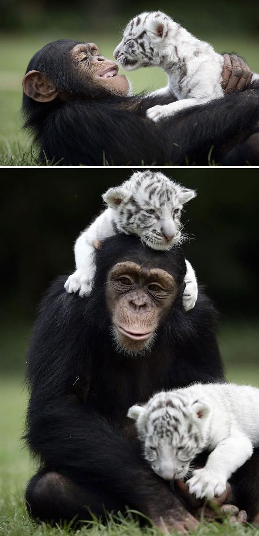 Se você acha que o mundo é terrível, essas 40 amizades com animais podem mudar sua opinião 32