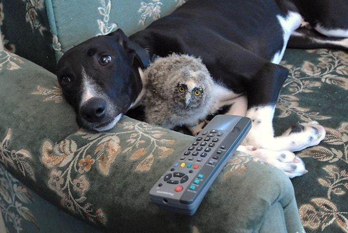 Se você acha que o mundo é terrível, essas 40 amizades com animais podem mudar sua opinião 33