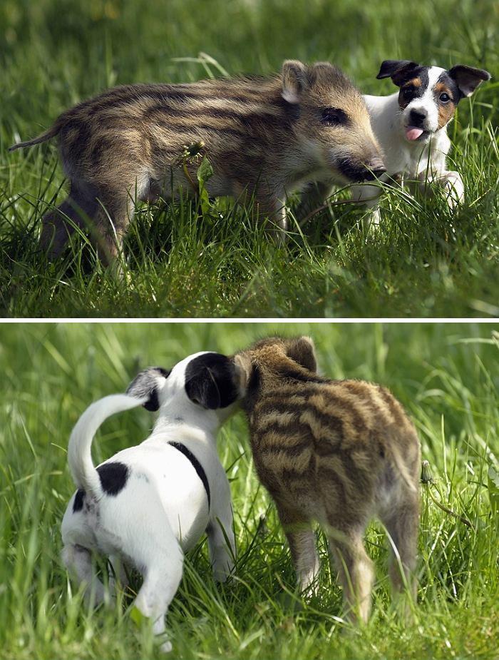 Se você acha que o mundo é terrível, essas 40 amizades com animais podem mudar sua opinião 34