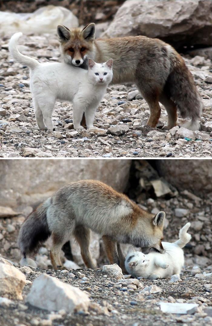 Se você acha que o mundo é terrível, essas 40 amizades com animais podem mudar sua opinião 37