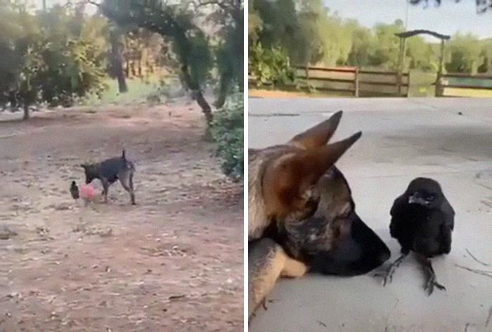Se você acha que o mundo é terrível, essas 40 amizades com animais podem mudar sua opinião 38