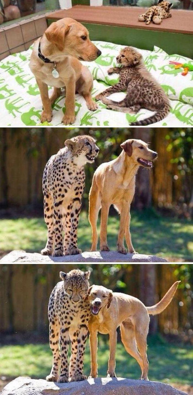 Se você acha que o mundo é terrível, essas 40 amizades com animais podem mudar sua opinião 40