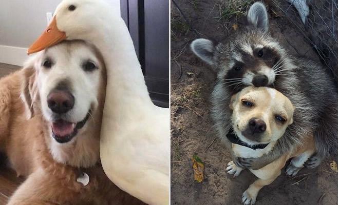 Se você acha que o mundo é terrível, essas 40 amizades com animais podem mudar sua opinião 28