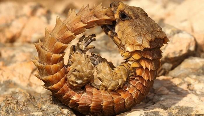 Seria um filhote de dragão? É impressionante essa espécie 4